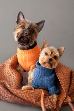 Escada and Charlie the Yorkies