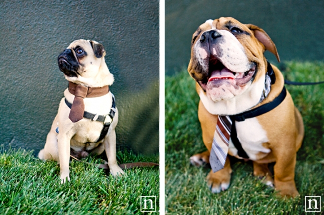 SF SPCA Yappy Hour | San Francisco Dog Photographer