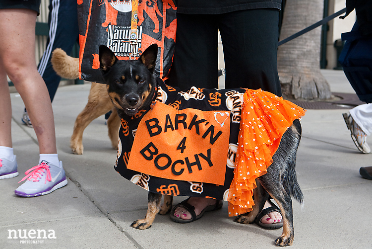 SF Giants Dog Day ATT Park | Nuena Photography