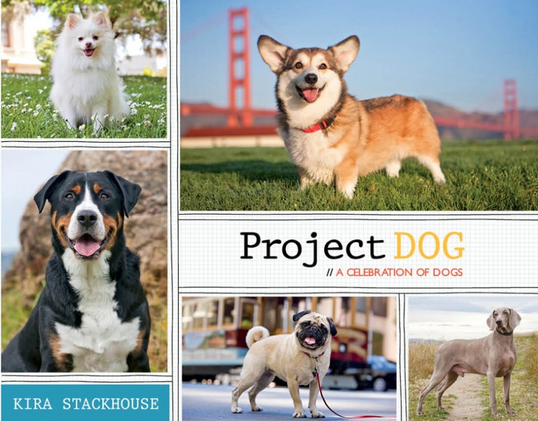 Project DOG by Kira Stackhouse | SF Bay Area Best Pet Photographer