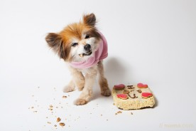 Rescue Dog Photographer - Candy the Pomeranian | Nuena Pet Photography