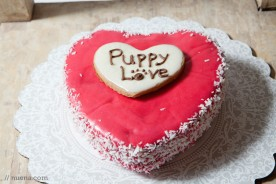 Paw Patch Pastries | Nuena Photography | San Francisco Commercial and Pet Photographer