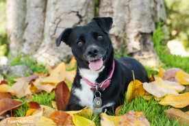 Roo the Terrier Mix | Nuena Photography