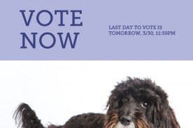 Vote Nuena Photography Best Pet Photographer in the Bay Area A-List