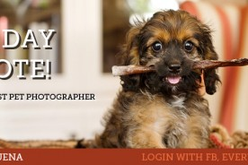 Vote Nuena Photography Best Pet Photographer in A-List