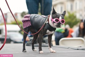 San Francisco Dog Photography by Kira Stackhouse | Nuena Photography