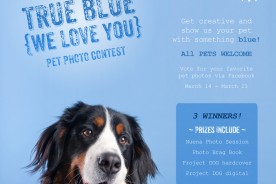 San Francisco Pet Photographer | Nuena Photography | True Blue Photo Contest