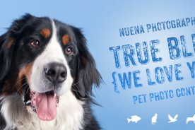 Nuena Photogrpahy True Blue Photo Contest