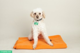 San Francisco Rescue Dog Photography - Muttville | Nuena Pet Photography