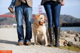 San Francisco Dog Photographer - Bo the Lab | Nuena Pet Photography