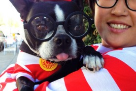 Harley the Boston Terrier & Kira Stackhouse Photographer