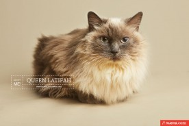 Cat Photographer - Berkeley Humane | Nuena Photography