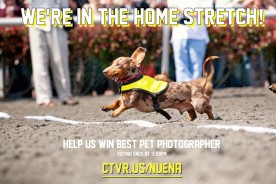 Bay Area A-List - Best Pet Photographer | Nuena Photography