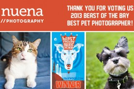 Bay Woof Beast of the Bay Awards - Nuena Photography Best Pet Photographer