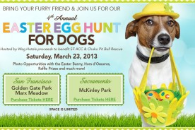 San Francisco Best Pet Photographer - Easter Egg Hunt | Nuena Photography by Kira Stackhouse