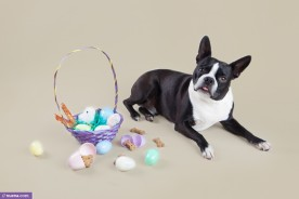 San Francisco Dog Photographer - Easter | Nuena Photography