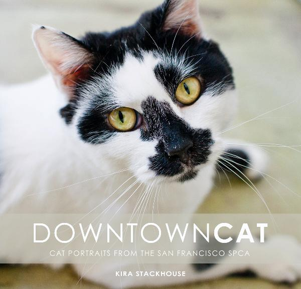 downtown cat