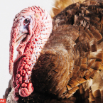 The Most Glamorous Turkey Photos You'll Ever See!