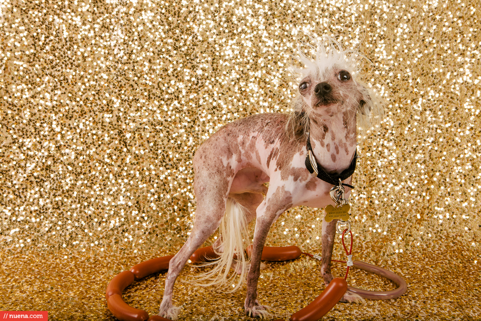 worlds ugliest dog contest 2015
