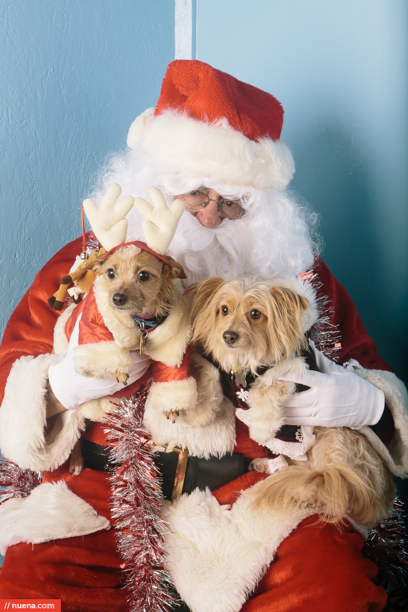 dogs with santa